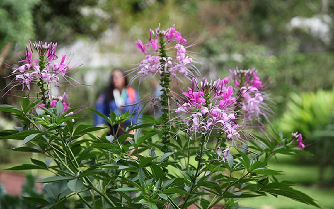 Celebran el d a nacional de jardines bot nicos diario de for Jardin botanico talleres
